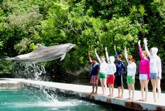 Dolphin Jump - Courtesy of www.dolphinspacific.com